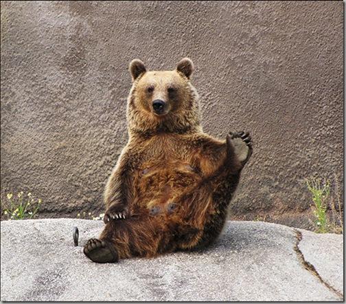 Yoga Bear 3