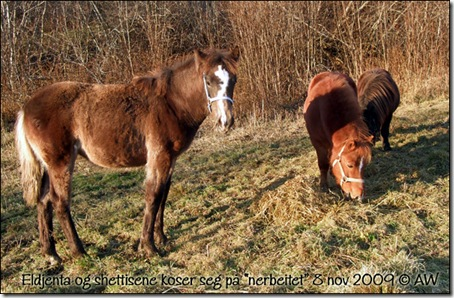 nerbeitet-8nov-09_01