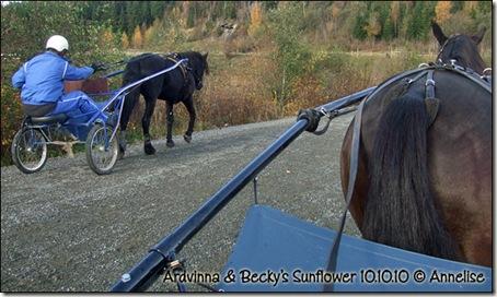 2010-10-10-ardvinna_02