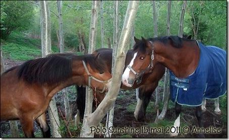 2011-polo-15mai_01