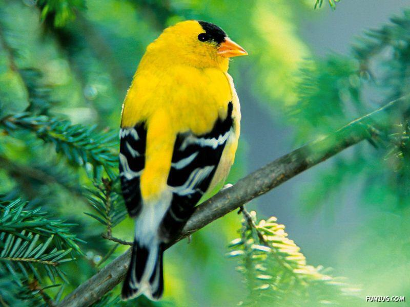 These birds are sooo beautiful... relish the magic of nature