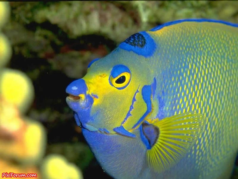 Amazing fish wallpapers & backgrounds - Great !!!
