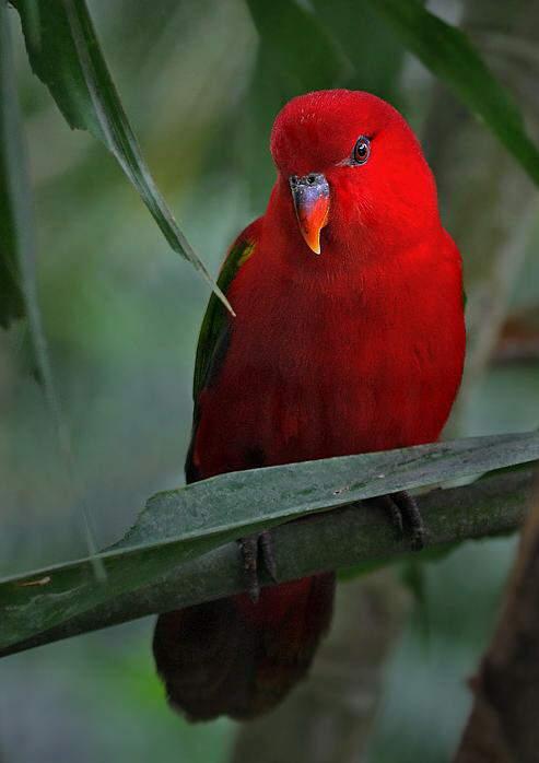 Beautiful Birds.