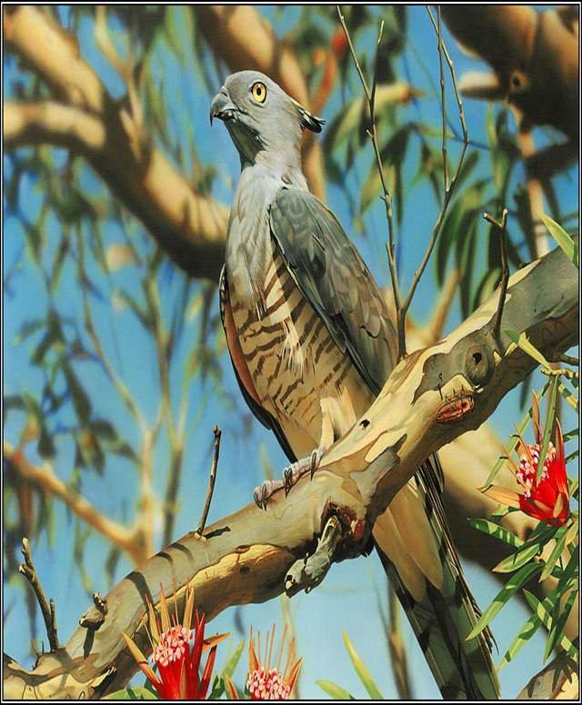 Wonderful Animals'/Birds' Shots