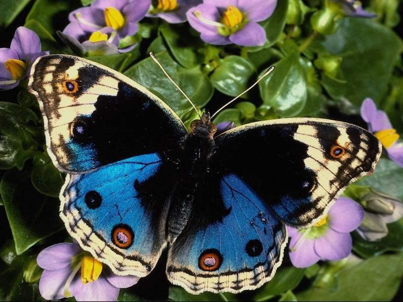 The Wonderful World of Butterflies [Photos]