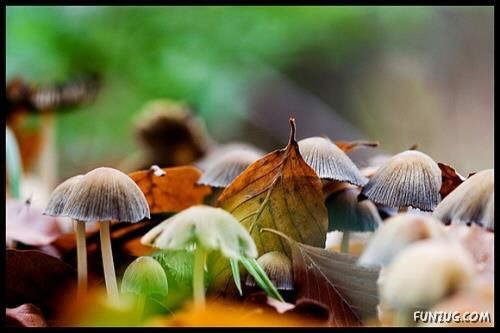 Beautiful... Different Mushrooms Collection