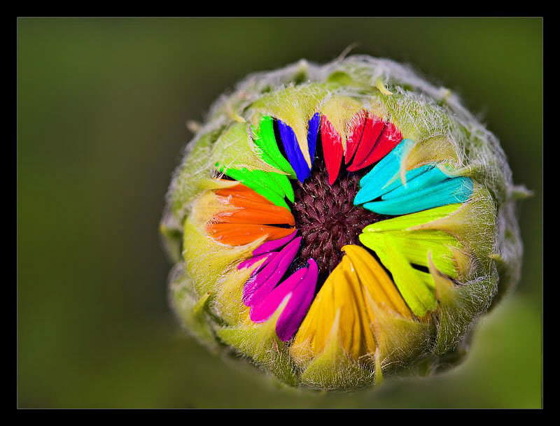 Fill Your Life with Colors: Photos