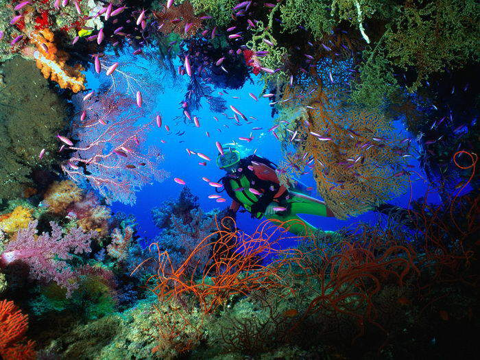 Our seas are full of life - Dolphins, Colorful Fishes, Seals, Underwater Marine life, Aquatic life on the Sea-bed