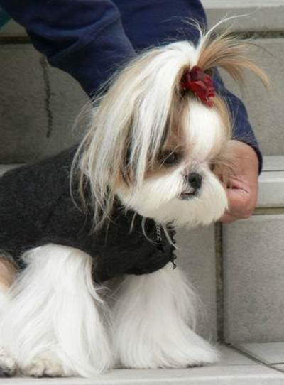 Pet's Hair Style 2009