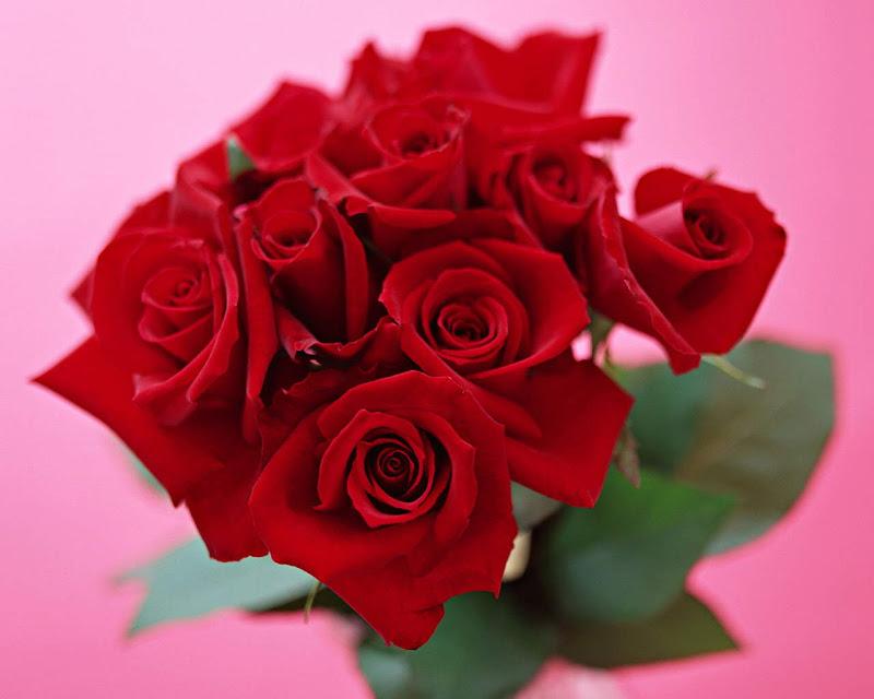 Beautiful Roses: Seven Wonderful Photos