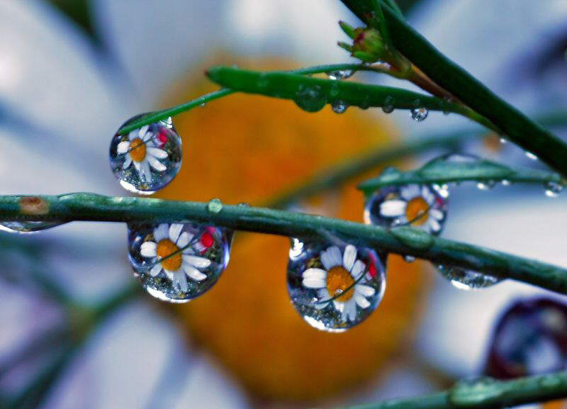 Beautiful Rain Drops like you've never seen before!