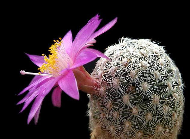 Have you seen a Blooming Cactus?
