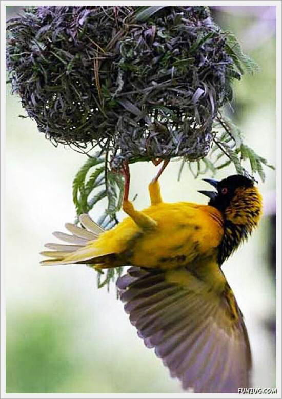 Beautiful Birds' Nests
