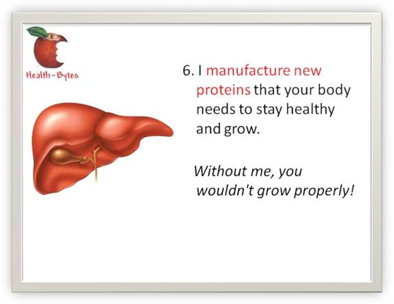 How much do you know about your Liver?