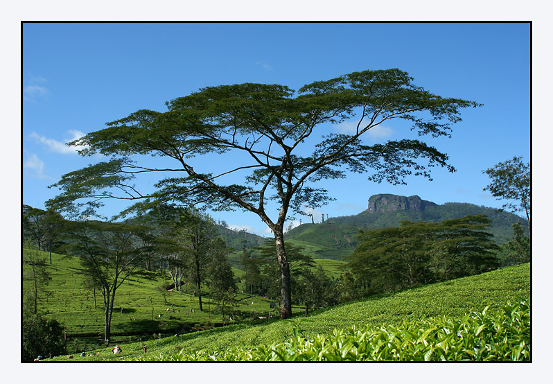 Beauty of Srilanka - Paradise on Earth