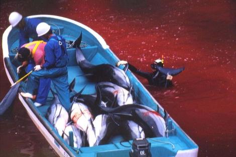 Pescadores japoneses durante una de las matanzas. | APF | Fuente El Mundo