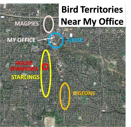 Bird Territories Office