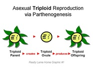 Triploid Repro
