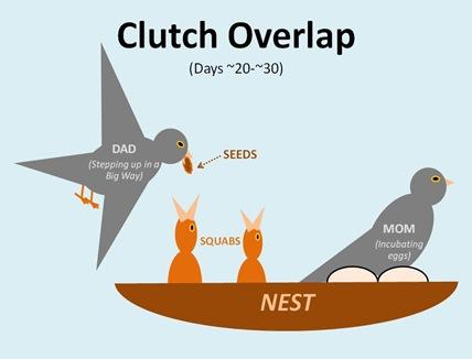 Clutch Overlap