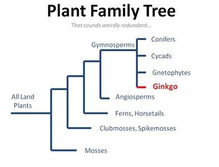 Plant Family Tree