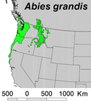 Abies_grandis_map