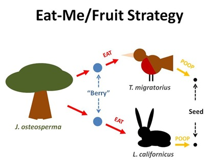 EatMe Fruit Strategy