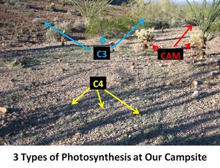 3Types Campsite