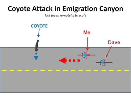 CoyAttack1
