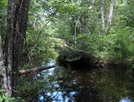 Jewett Brook