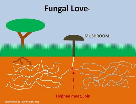 Fungal Love