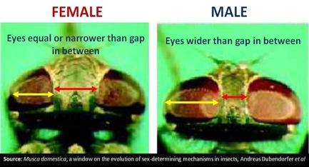 M F Eye compare