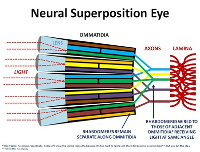 Neural Graphic