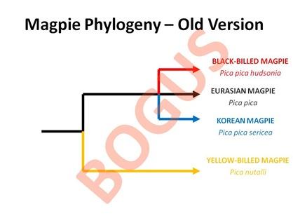 Bogus Phylogeny