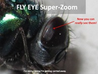 GBF Eye Superzoom1