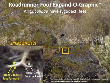 RR Foot ExpandO