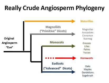 RCA Phylogeny