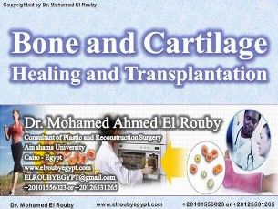 bone and cartilage bioenginering