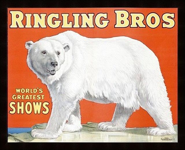 polar-bear-poster