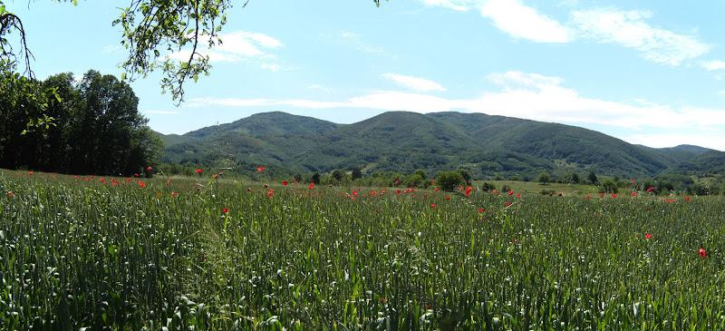 Polje pšenice i Kruševica