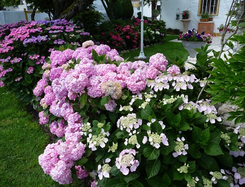 flor hortencia 55