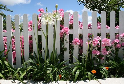 flor 12 agapanto br