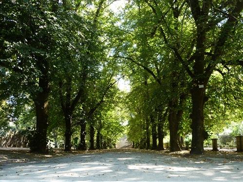1 - jardim botanico - Coimbra