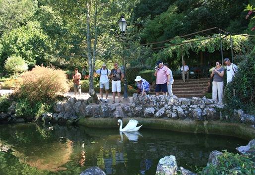 4 - Palácio de Buçaco - cisne