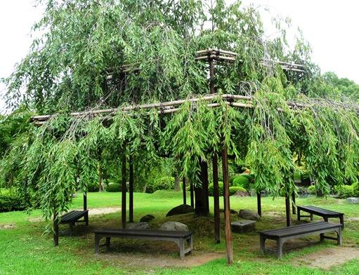 16.templo Toji - jardim - lago - descansar debaixo da cerejeira