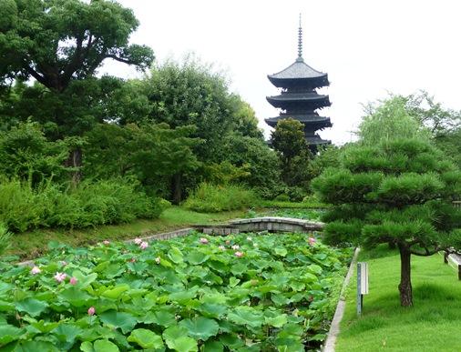 5.templo Toji- pagode e flor de lotus