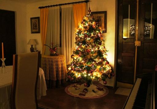 5. Natal 2010 - minha arvore de natal