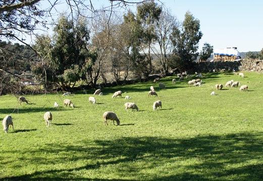 Idanha a Velha - paisagem ao redor da aldeia 3