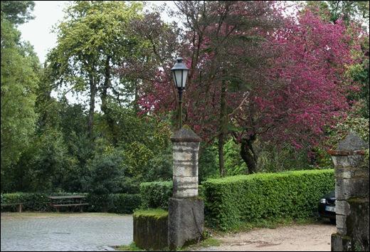 Buçaco - jardim do palácio 3