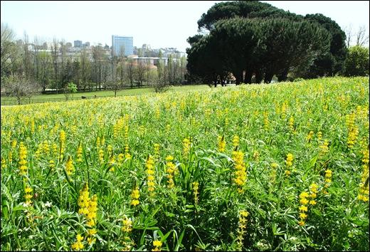 jardim serralves - flores do campo apicultura