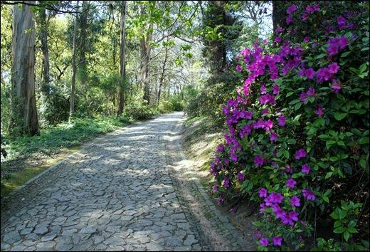 jardim serralves  - caminho com azaléia